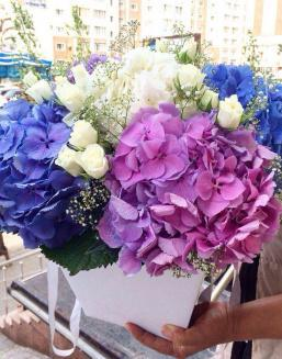 Bouquet of hydrangea | Flowers to women